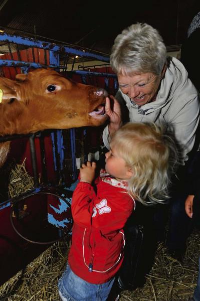 Sofia, 2 år, och farmor Margrethe Berntsson gillade kalvarna.