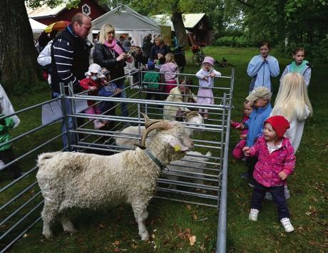 Fåren är väldigt populära bland barnen.