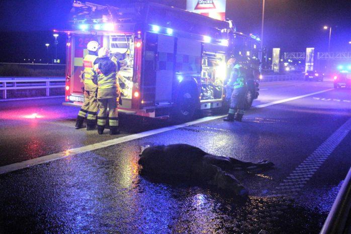 En älg dog efter en olycka på E45. Foto: Christer Grändevik.