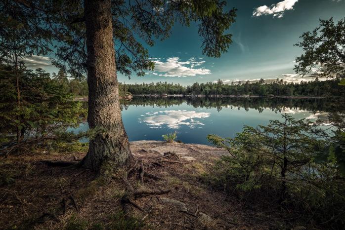 """Piotr Korytowski vinnarbidrag i Vi-skogens tävling """"Årets trädfotograf"""". Sjön heter Djupevatten och ligger i Ströms Kronoparken."""