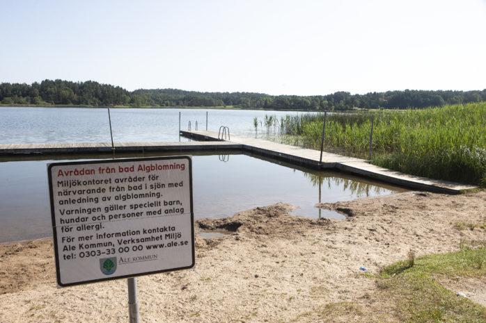 Algblomning är ett återkommande problem som ofta drabbar Vimmersjön och Hålsjön. Ale kommun avråder därför allmänheten från bad i dessa sjöar.