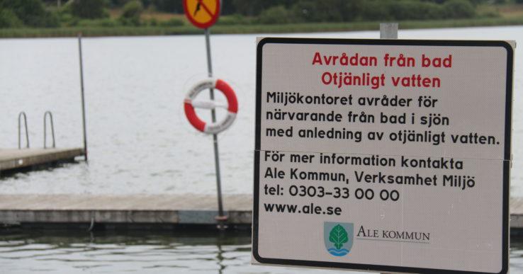 Algblomning i badsjöar
