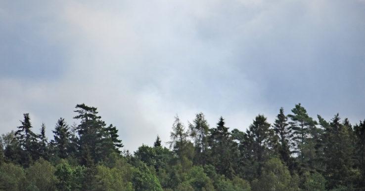 Skogsbrand i södra Nygård